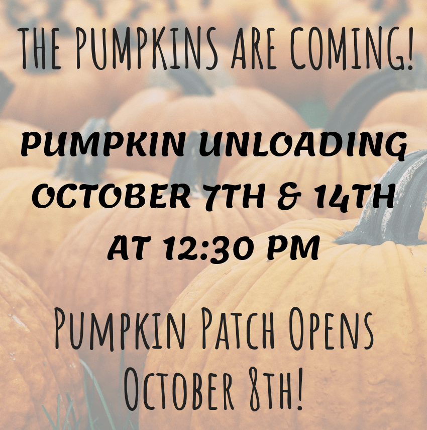 THE PUMPKINS ARE COMING! (4)